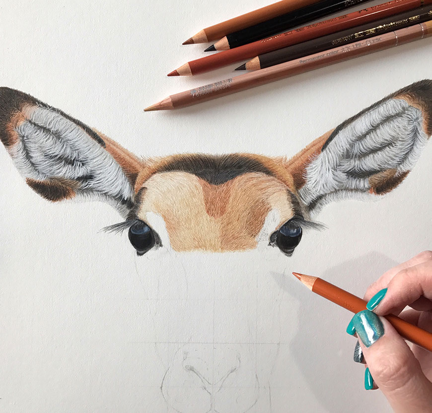 drawing-a-picture-of-a-buck-with-coloured-pencils