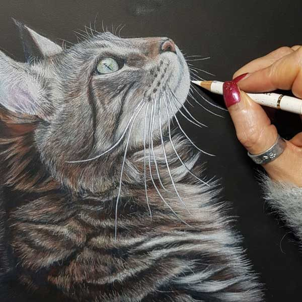 Sketch-by-Lisa-Ann-Watkins-of-a-cat